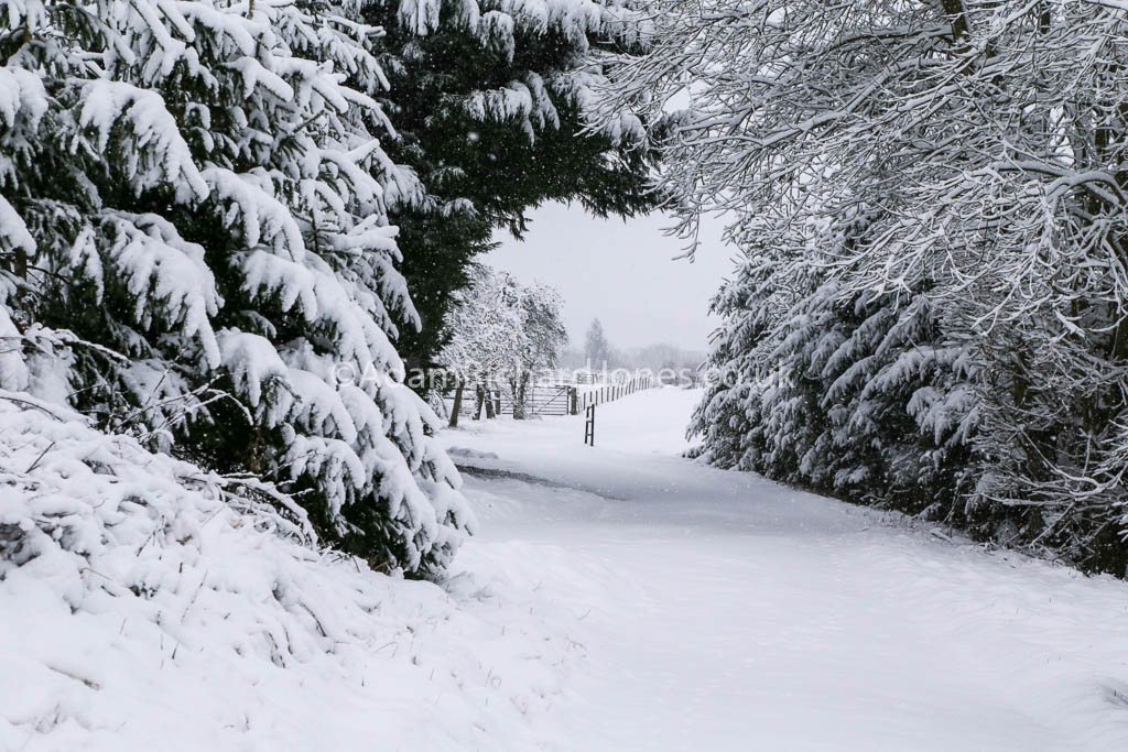Snowy scenes on our caravan park in Worcestershire